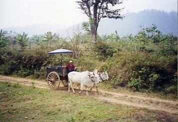 Thai002